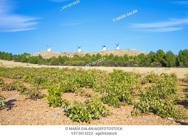 Vineyard and windmills. Alcazar de San Juan, Ciudad Real province, Castilla La Mancha, Spain