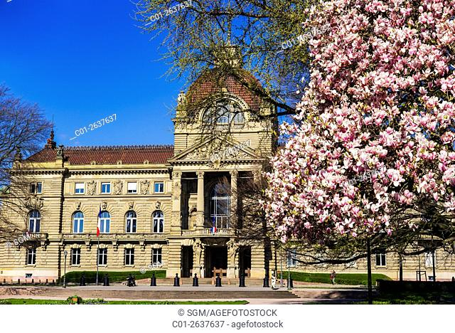 'Palais du Rhin', Palace of the Rhine, magnolia tree in blossom, Strasbourg, Alsace, France
