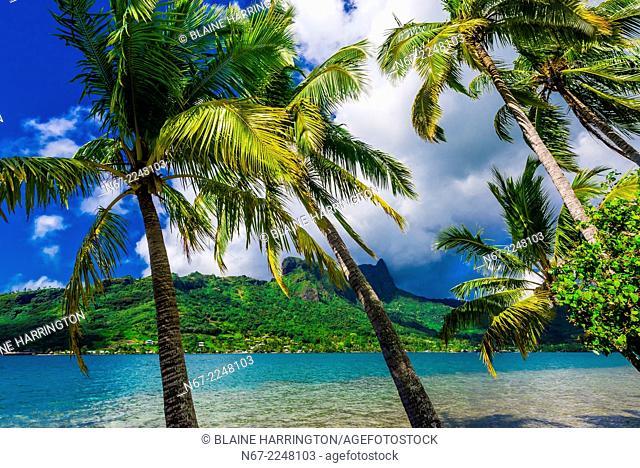 Cook's Bay, island of Moorea, French Polynesia