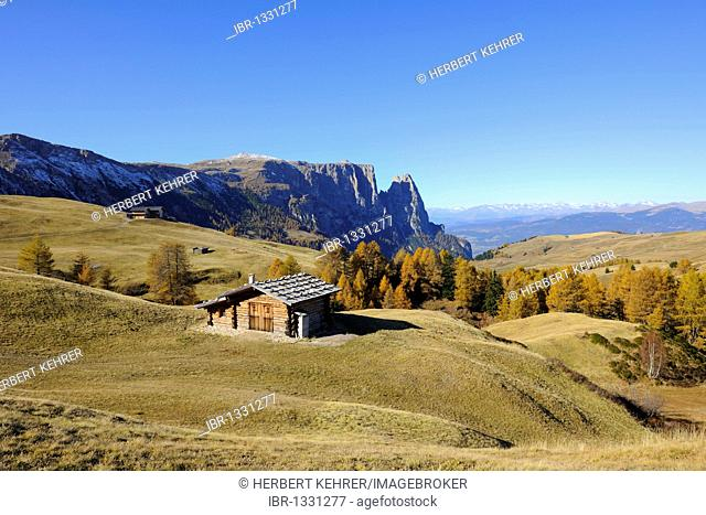 Seiser Alm mountain pasture with Mt. Schlern, Dolomites, South Tyrol, Italy, Europe