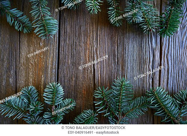 Fir real branch christmas symbol on wooden vintage background