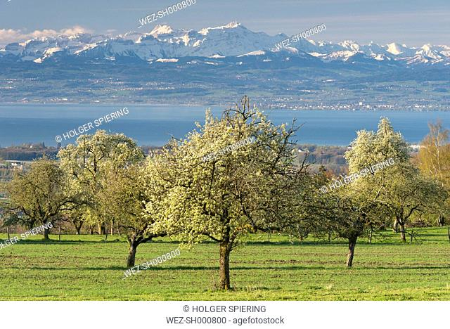 Germany, View of fruit trees in front of Swiss Alps