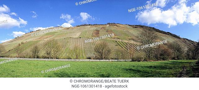 wine landscape near Enkirch on the Moselle panorama