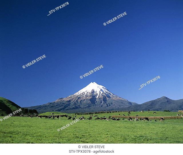 Egmont, Holiday, Landmark, Mount, Mount egmont, Nationalpark, New zealand, North island, Park, Taranaki, Tourism, Travel, Vacati