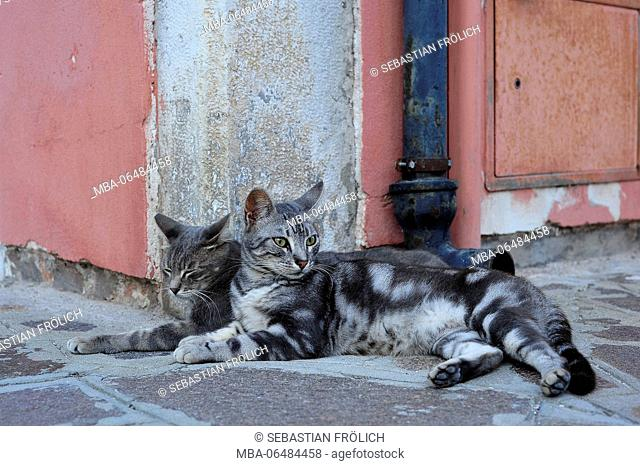 Two young cats lie in the gutter of the Old Town of Burano and enjoy