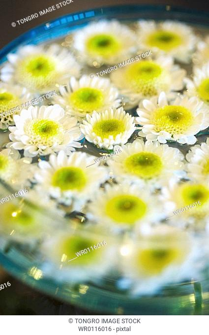 white flower and transparent bowl with water