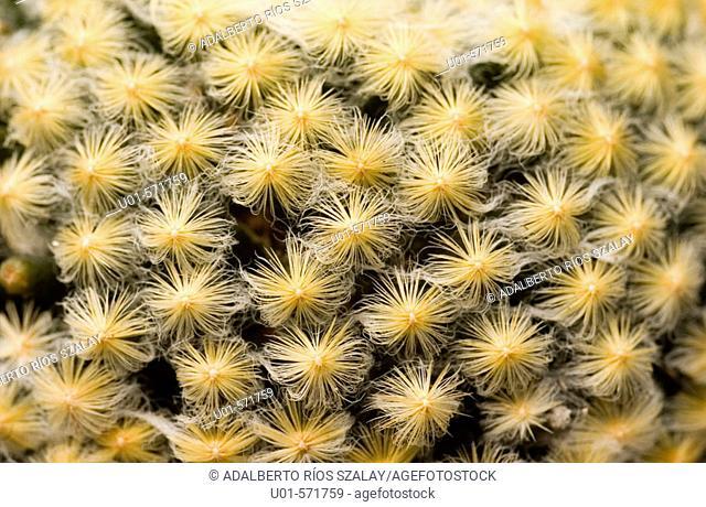 Prickles Cactus
