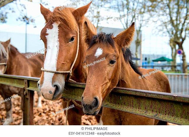 duo portrait of a mare and her foal
