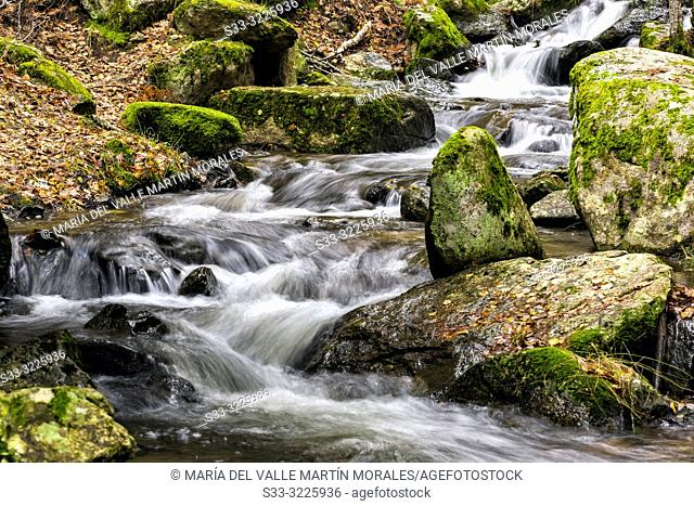Moss and leaves at Sestil stream on an autumn day. Canencia. Madrid. Spain. Europe