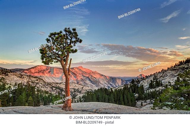 Tree growing in Yosemite National Park, California, United States