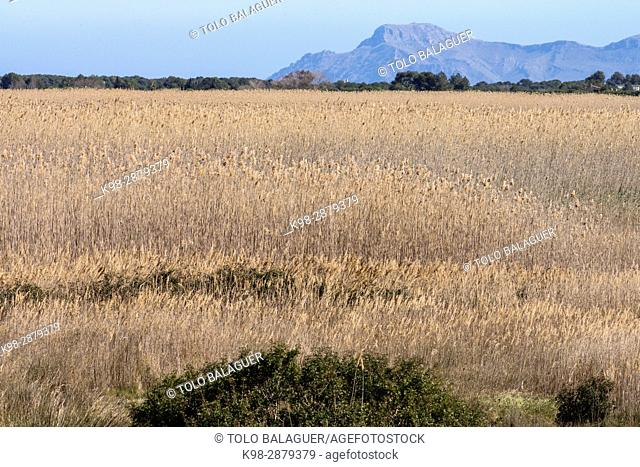 Parque natural de la Albufera de Mallorca, Prat de Son Serra, Mallorca, balearic islands, spain, europe
