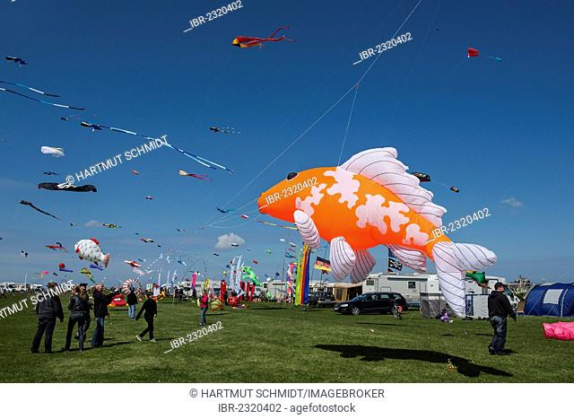Norddeich International Kite Festival, Norddeich, East Frisia, Lower Saxony, Germany, Europe