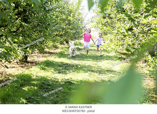 Two happy sisters running with dog on meadow