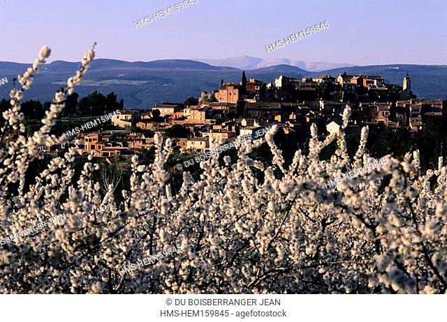 France, Vaucluse, Luberon, Roussillon, labelled Les Plus Beaux Villages de France The Most Beautiful Villages of France, cherry trees in blossom