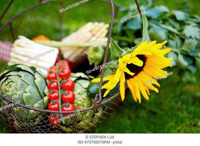 Close up of basket of fresh vegetables