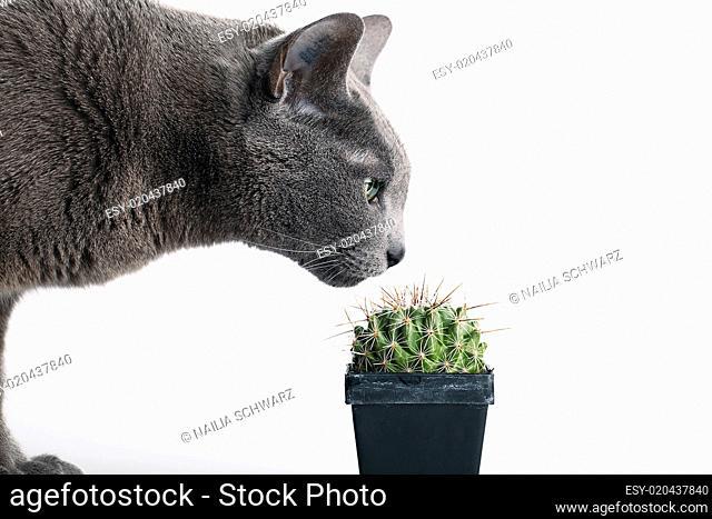Neugierige Katze inspiziert Kaktus