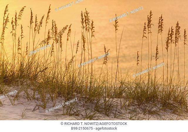 Sunset reflections on the Gulf of Mexico with designs made by beach grass, Orange Beach, Alabam