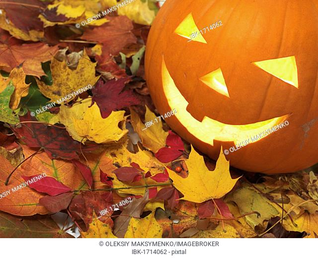Carved smiling pumpkin Jack-o'-lantern on colorful fall leaves, Halloween
