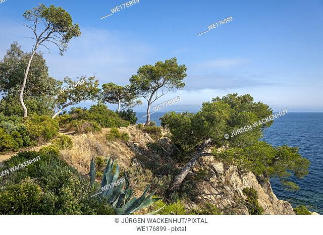 Landscape on Pointe du Layet, Le Lavandou, Var, Provence-Alpes-Cote d`Azur, France, Europe
