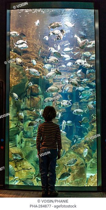 Boy watching fishes in an aquarium