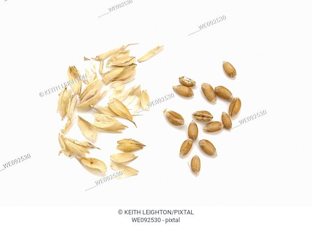 grains of wheat and chaff