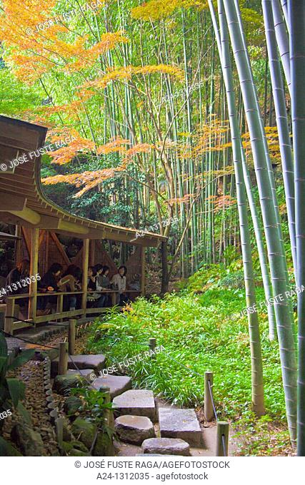 Kamakura City, Bambu Wood, Tea Shop