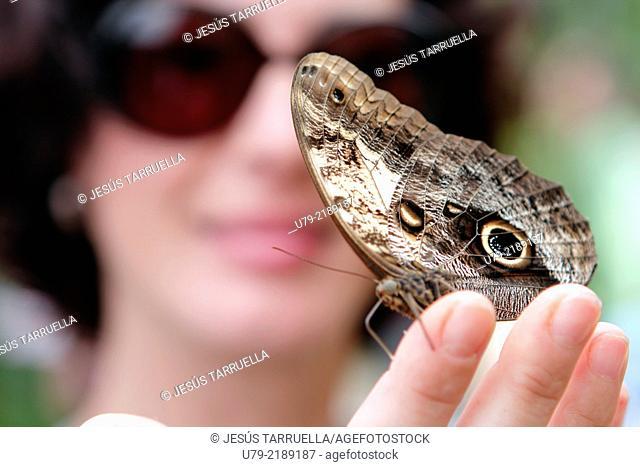 Caligo memnon butterfly on woman hand