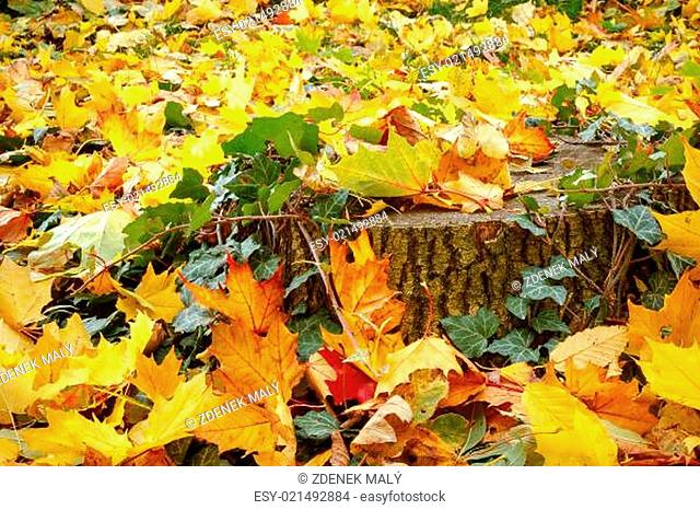 orange red and green leaves and stump