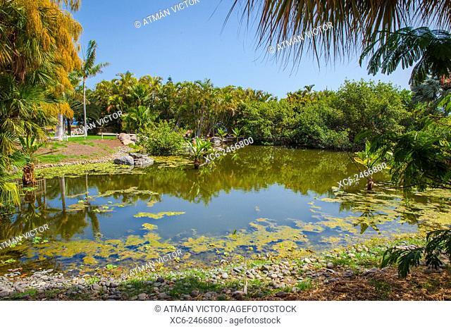 Palmetum Botanic Garden from Santa Cruz de Tenerife