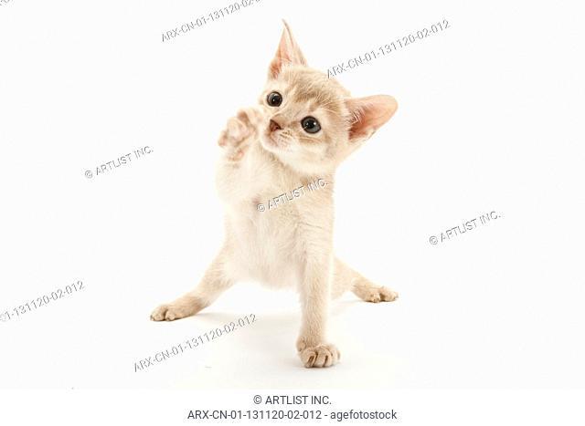 A playful kitten