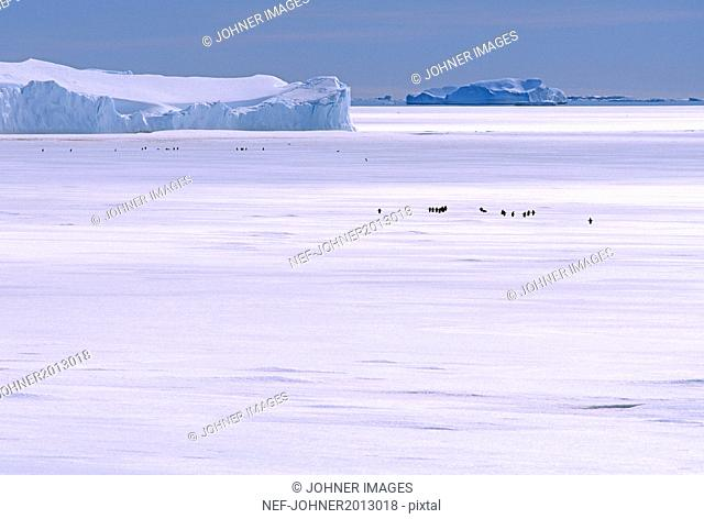 Silhouettes of penguins in snowy landscape