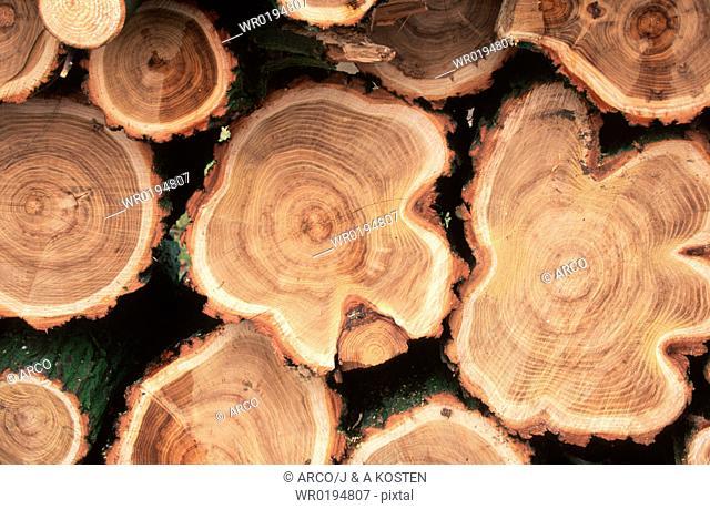 Pile, of, wood, tree, trunks