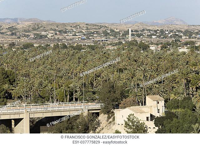 Palm grove of elche with more than 200. 000 specimens, is the largest palm grove in Europe