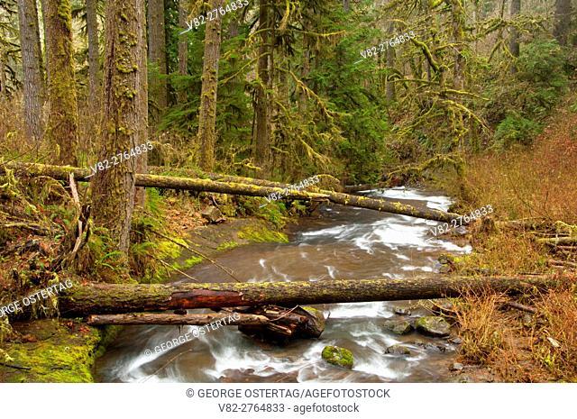 McDowell Creek, McDowell Creek Falls County Park, Linn County, Oregon