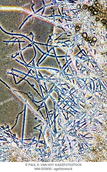 Microscopy, biological