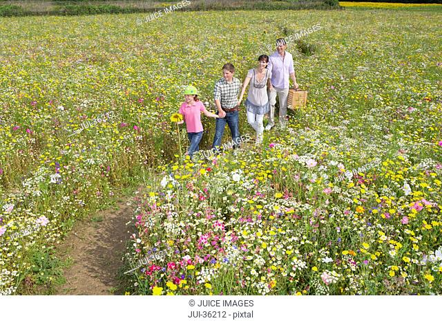 Smiling family holding hands and walking among wildflowers in sunny meadow