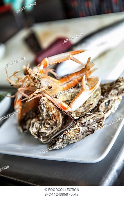 Langoustine and oysters