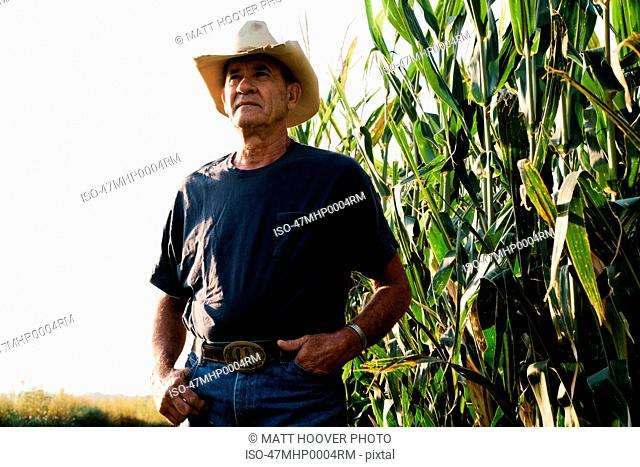 Farmer standing in corn field