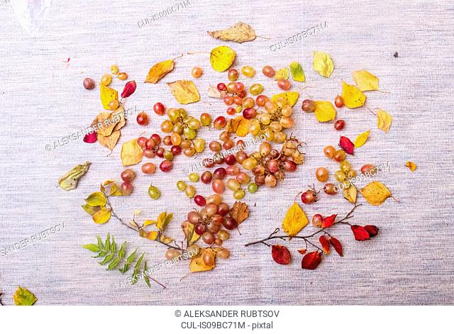 Still life of grapes and autumn leaves