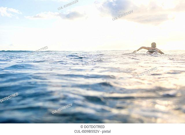 Rear view of woman paddling on surfboard in sea, Nosara, Guanacaste Province, Costa Rica