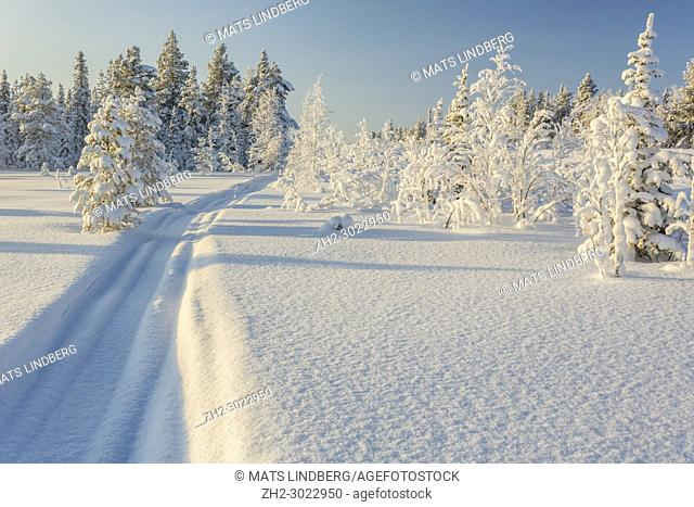 Snowmobile track in the snow with snowy spruce trees and blue skye and warm light, Gällivare, Swedish Lapland, Sweden
