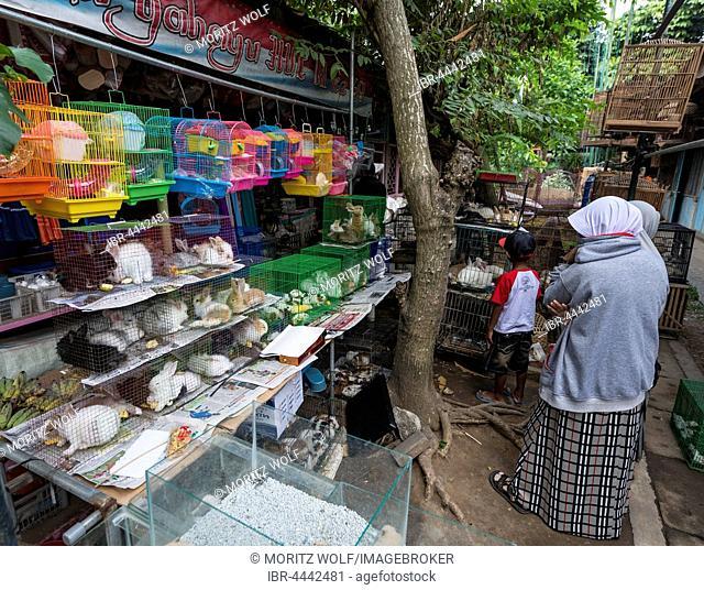 Rabbits sitting in their cages, bird market and livestock market, Yogyakarta, Java, Indonesia