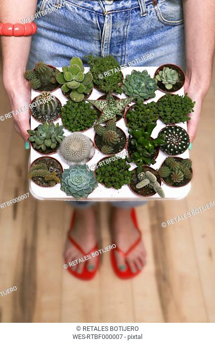 Hipster young woman with tray cacti and succulents