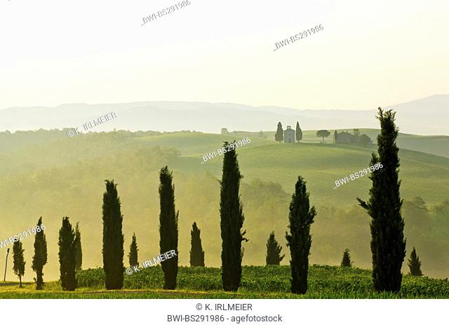 Italian cypress (Cupressus sempervirens), cypresses in hilly landscape, Italy, Tuscany