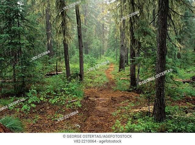 Forest trail at Pacific Crest Trail near junction to Snowshoe Lake, Three Sisters Wilderness, Willamette National Forest, Oregon