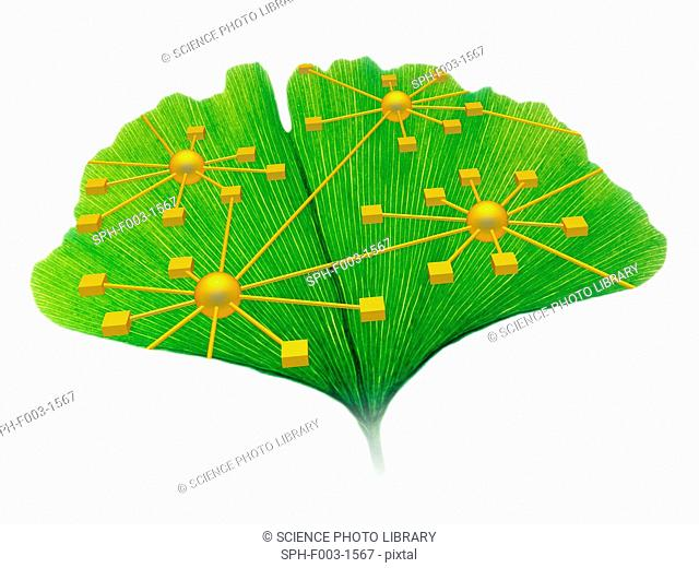 Ginkgo and network diagram