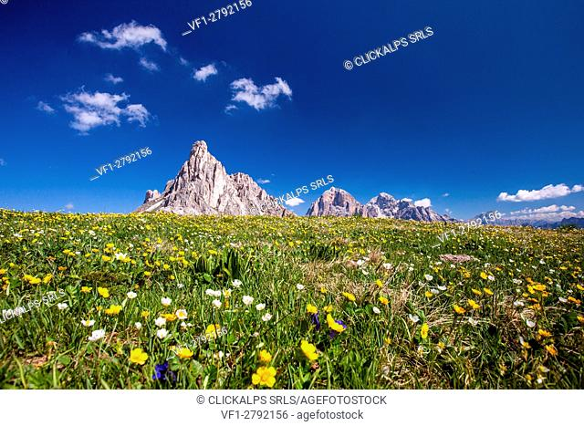 Flower carpet at Giau Pass with the peaks of Gusela and Tofane. Giau Pass, Cortina d'Ampezzo, Veneto Italy Europe