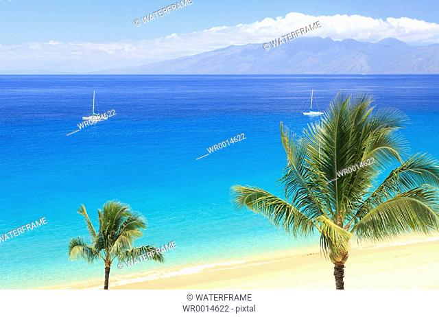 Palm-lined Beach on Hawaii, Maui, Pacific, Hawaii, USA