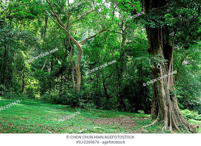 Botanical garden in Penang, Malaysia