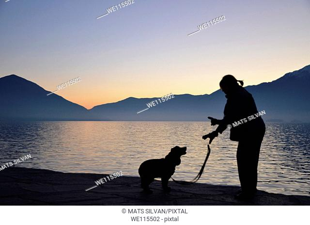 Woman comunicate with a cocker spaniel dog in blue hour